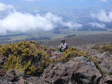 A rare plant found on the island of Maui at an elevation of 2,100 to 3,000 metres (6,900 to 9,800 ft) on the dormant Haleakalā volcano — on the summit depression, the rim summits, and surrounding slopes — in Haleakalā National Park.
