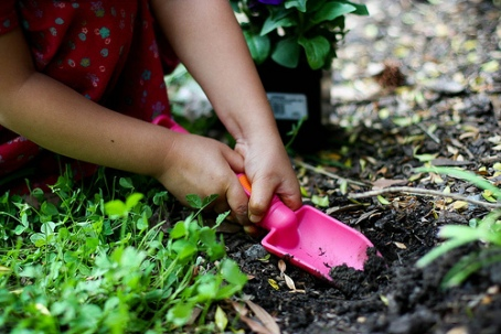 Click here for 50 Ways to Explore Nature in Your Own Backyard!