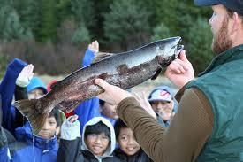 teaching kids about salmon