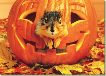 Happy Halloween Let's Go Chipper Squirrel