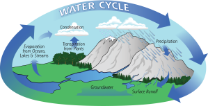 Learning about the water cycle and condensation | Let's Go Chipper | Eco-education for kids