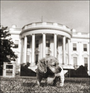Presidential Puppy