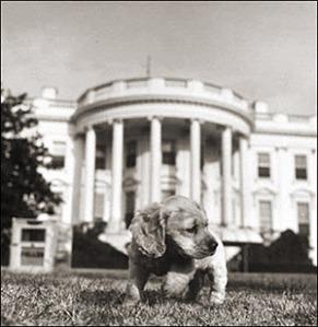 Presidential Puppy